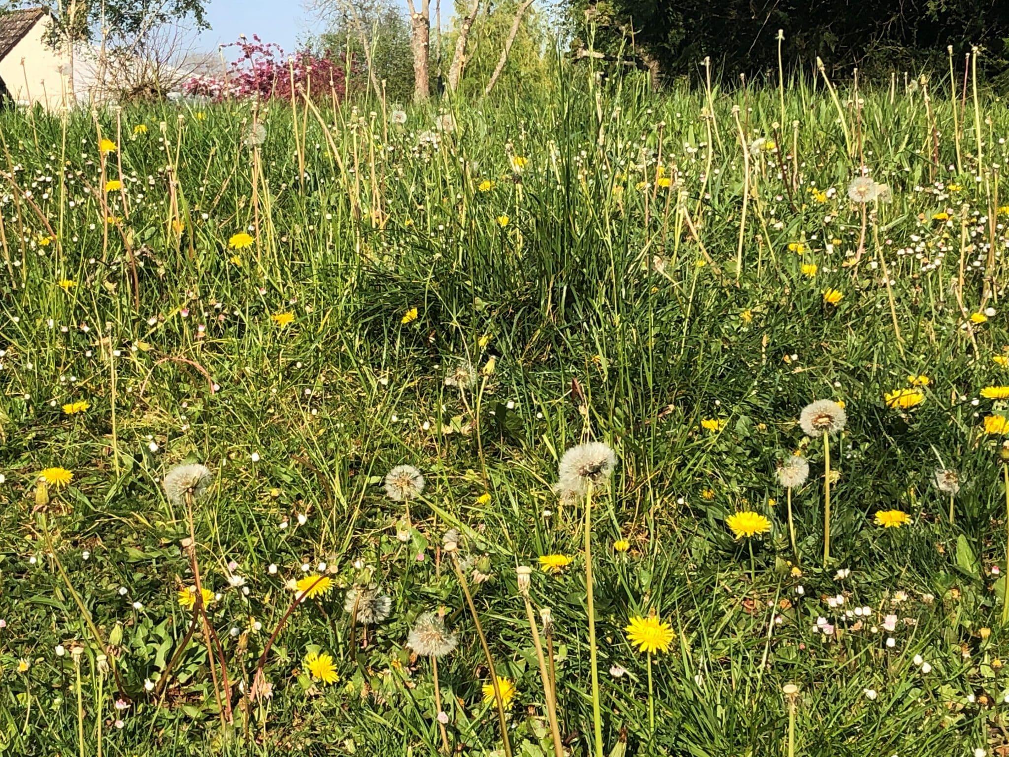 COVID-19 : Voirie et espaces verts