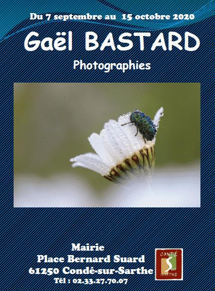 Galerie citoyenne – exposition «nature» de Gaël BASTARD